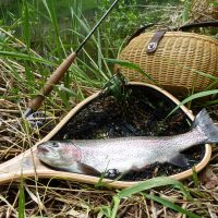 Fang des Tages – Fliegenfischerrunde Pesenbach